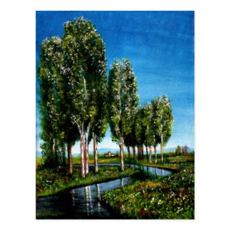 BIRCH TREES IN TUSCANY POST CARDS
