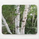Birch Trees Mousepad