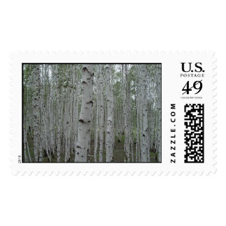Birch trees of Siberia Postage Stamps