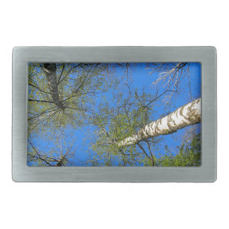 Birch trees on the background of the spring sky - belt buckle