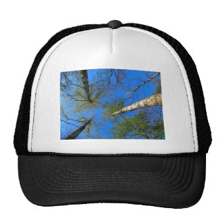 Birch trees on the background of the spring sky - trucker hat
