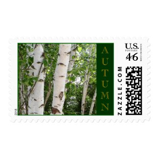 Birch Trees Postage Stamp