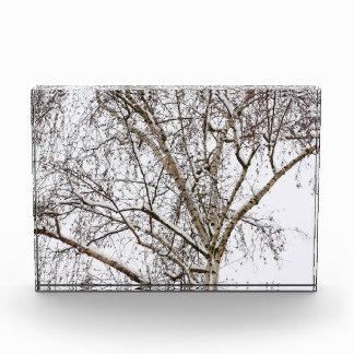 birch with snow acrylic award