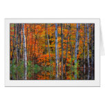 Birches in Highwater Greeting Card