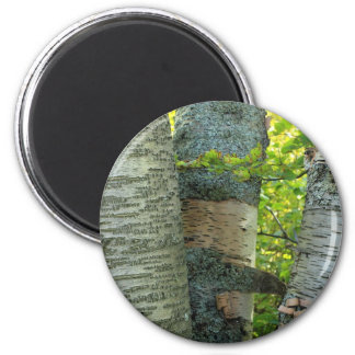 BirchTree Refrigerator Magnets