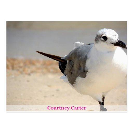 bird3.jpg tarjetas postales