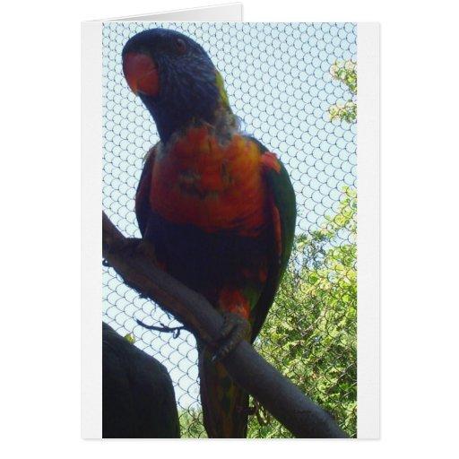 BIRD3 TARJETA DE FELICITACIÓN