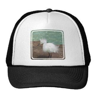 bird-29 mesh hat