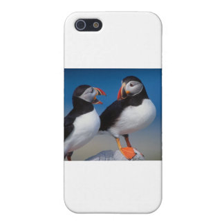 bird a pair of puffins cover for iPhone 5