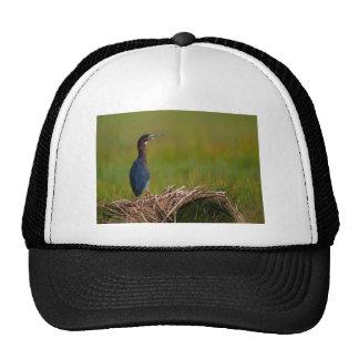 bird a quiet moment green heron trucker hat