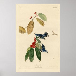 Bird, America, Azure Warbler, Audubon, Vintage Poster