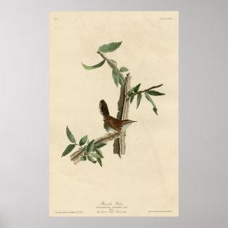Bird, America, Bewick Wren, Audubon, Vintage Poster