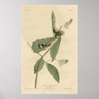 Bird, America, Black Yellow Warbler, Audubon, Vint Print