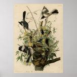 Bird, America, Mocking Bird, Audubon, Vintage Posters