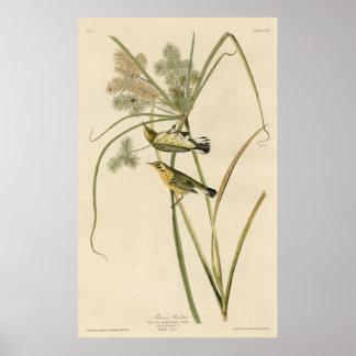Bird, America, Prairie Warbler, Audubon, Vintage Poster
