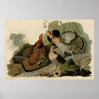 Bird, America, Ruffed Grouse, Audubon, Vintage Poster