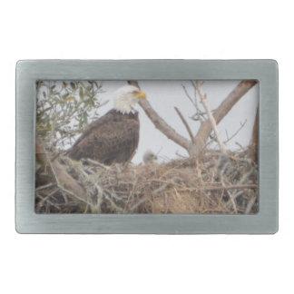 Bird American Bald Eagle Eaglet  Nest Nature Rectangular Belt Buckle