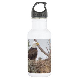 Bird American Bald Eagle Eaglet  Nest Nature Stainless Steel Water Bottle