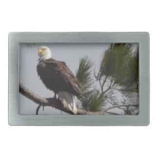 Bird American Bald Eagle Nature Rectangular Belt Buckles