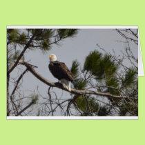 Bird American Bald Eagle Nature Card