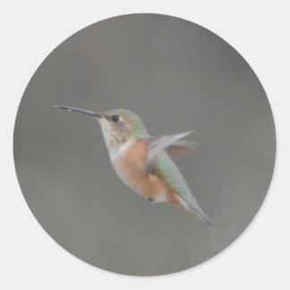 Bird American Rufous Hummingbird Nature Classic Round Sticker