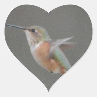 Bird American Rufous Hummingbird Nature Heart Sticker