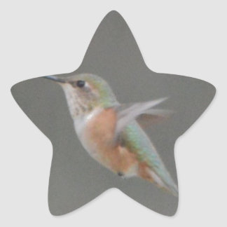 Bird American Rufous Hummingbird Nature Star Sticker