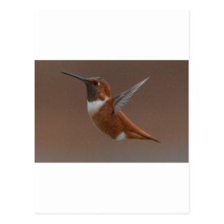Bird American Rufus Hummingbird Nature Postcard