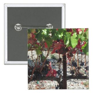 Bird among Grapes on Vine in Vineyard 2 Inch Square Button