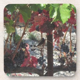 Bird among Grapes on Vine in Vineyard Coasters