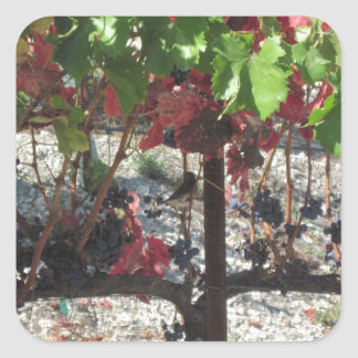 Bird among Grapes on Vine in Vineyard Square Sticker