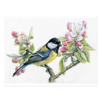 Bird and Apple Blossom Postcard