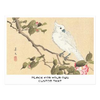 Bird and Flower Album, Cockatoo and Camellia Postcard