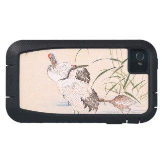 Bird and Flower Album, Wading Cranes vintage art