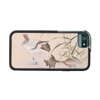 Bird and Flower Album, Wading Cranes vintage art iPhone 5/5S Cases