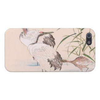 Bird and Flower Album, Wading Cranes vintage art iPhone 5 Case