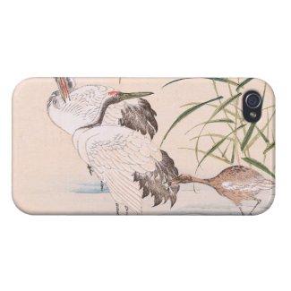 Bird and Flower Album, Wading Cranes vintage art iPhone 4 Case