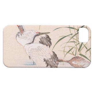 Bird and Flower Album, Wading Cranes vintage art iPhone SE/5/5s Case