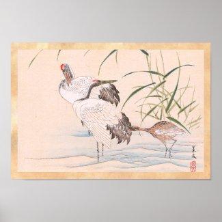 Bird and Flower Album, Wading Cranes vintage art Print