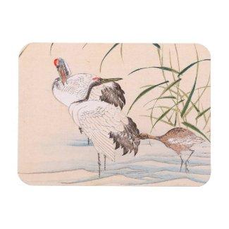 Bird and Flower Album, Wading Cranes vintage art Rectangular Magnet