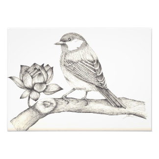 Bird and Flower Photo Print