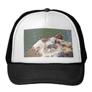 Bird and Turtle Photo Hats