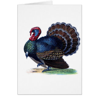 Bird Animal Holiday Feathers Turkey Vintage Card