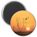 Bird at sunset photograph refrigerator magnet