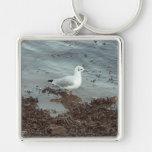 Bird at Water Edge. Black Headed Gull. Key Chain