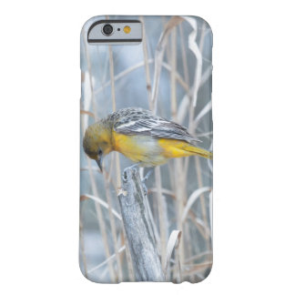 Bird Baltimore Oriole Barely There iPhone 6 Case