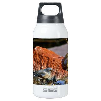 bird bath insulated water bottle