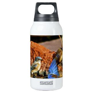 bird bath thermos bottle