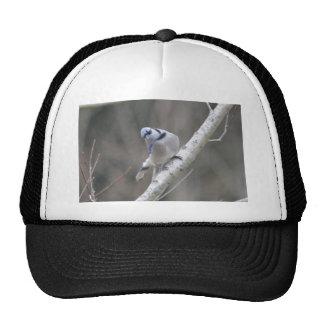 Bird Blue Jay Nature Trucker Hat