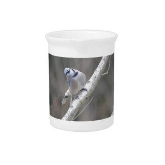 Bird Blue Jay Nature Drink Pitcher